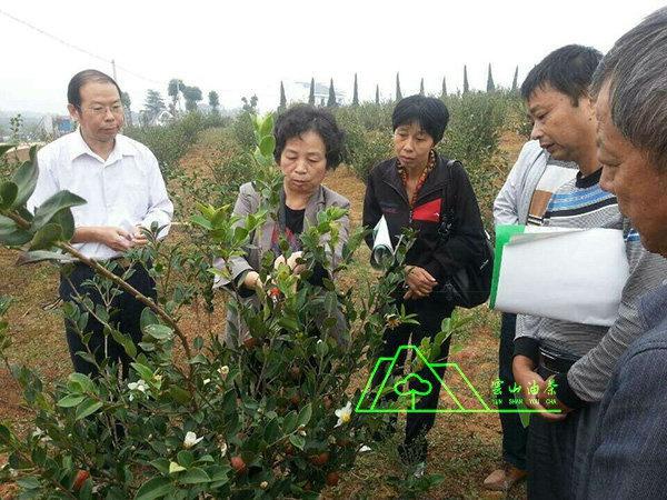 油茶專家·江西農業大學首席教授郭曉敏基地指導工作